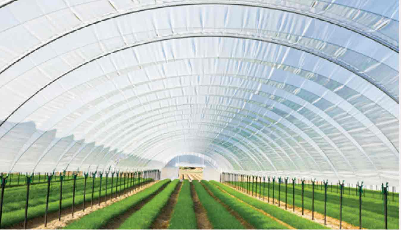 Green House made from Films of Soltex Petro Masterbatch